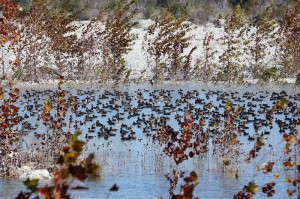 Duck Hunt in Mexico-Stuart Ranches